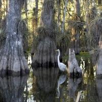 Partez à la découverte des Everglades en Floride