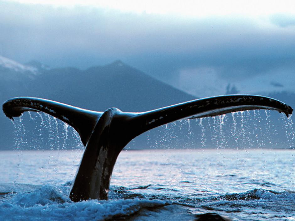 ou voir une baleine