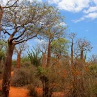 Madagascar pour une expérience unique